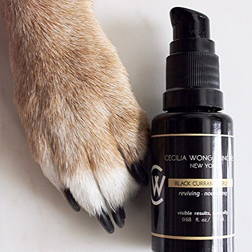 Cecilia Wong's Guide to Cruelty-Free Drugstore Beauty Products: How to Live Ethically on a Budget