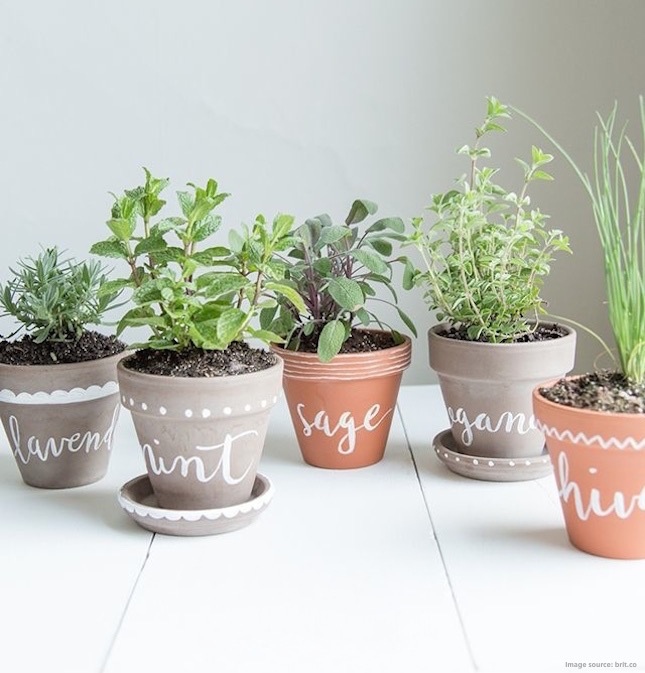 Grow Your Own Glow: How to Make Beautifying DIY Products Using Herbs ...